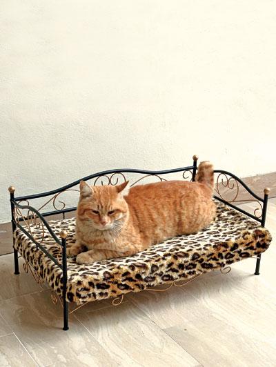 Letto in ferro battuto per gatti - - Dmail